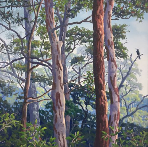 Currawong and Mixed Forest